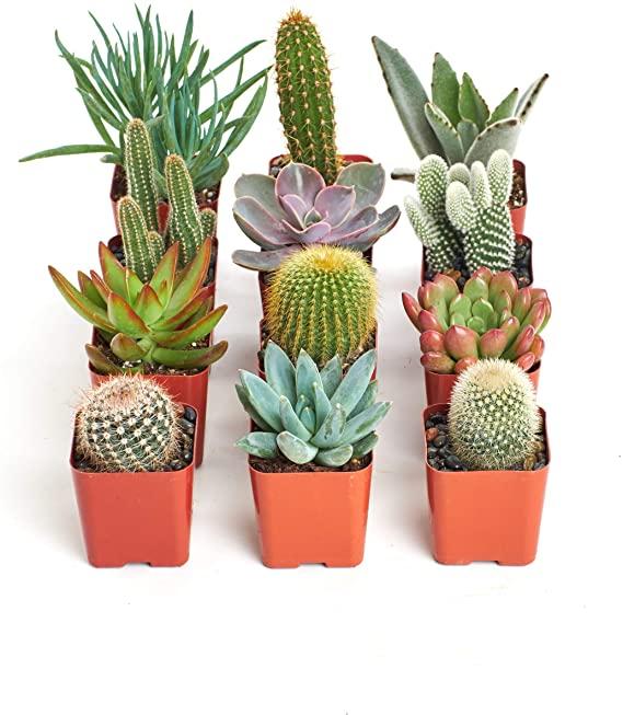 Plantas de poco cuidado